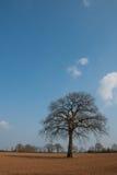 Baum in den Sümpfen lizenzfreies stockfoto