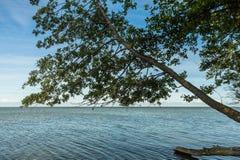 Baum, der über dem grünen Wasser einer Bucht hängt Lizenzfreies Stockfoto