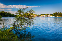 Baum, der über dem hinteren Fluss am Cox-Punkt-Park in Essex, Mrz hängt lizenzfreies stockfoto