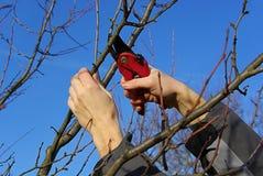 Baum, der 20 schneidet Lizenzfreies Stockfoto