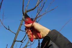 Baum, der 21 schneidet Lizenzfreies Stockbild