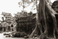 Baum an der Angkor Tempelwand Lizenzfreie Stockfotos