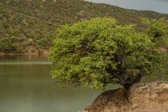 Baum, der auf dem Rand lebt Lizenzfreies Stockfoto