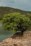Baum, der auf dem Rand lebt Lizenzfreies Stockbild
