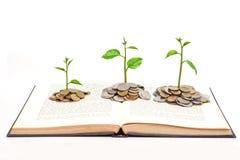 Baum, der auf einem Buch wächst Lizenzfreie Stockfotos