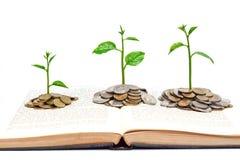 Baum, der auf einem Buch wächst Stockbilder