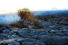 Baum, der auf Lava-Fluss brennt lizenzfreie stockfotos