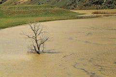 Baum, der aus dem Wasser heraus wächst Lizenzfreie Stockfotos