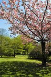 Baum in der Blume Stockfoto