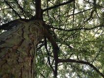 Baum der Blumen Lizenzfreie Stockfotografie