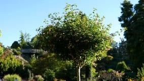 Baum in der Brise am sonnigen Tag stock video footage