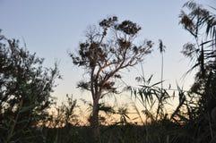 Baum in der Dämmerung Stockfotografie