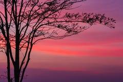 Baum an der Dämmerung mit Strahlen der Sonne Lizenzfreies Stockfoto