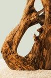 Baum, der durch den Fluss geformt wurde Lizenzfreie Stockfotos