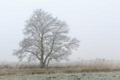 Baum, der in einer nebeligen Winterlandschaft steht Lizenzfreies Stockbild