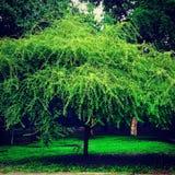 Baum in der Farbe Lizenzfreies Stockfoto