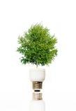 Baum in der Glühlampe Lizenzfreie Stockfotografie