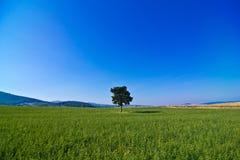 Baum in der grünen Landschaft Stockbild
