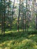 Baum in der grünen Wiese nahe dem Meer Lizenzfreie Stockfotografie