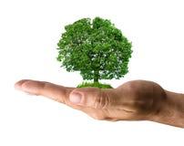 Baum in der Hand Stockfoto