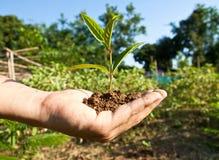 Baum in der Hand Lizenzfreie Stockbilder