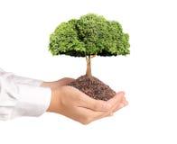Baum in der Hand Lizenzfreies Stockfoto