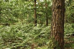 Baum, der hoch steht Lizenzfreies Stockbild