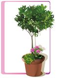 Baum, der im dekorativen Topf wächst Vektor stock abbildung