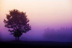 Baum, der im nebeligen purpurroten Sonnenaufgang steht Stockfoto