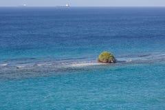 Baum, der im Ozean wächst Lizenzfreie Stockfotos