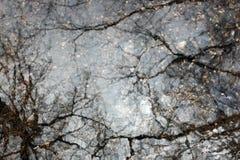Baum, der im Wasser sich reflektiert Stockbild