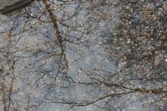 Baum, der im Wasser sich reflektiert Lizenzfreies Stockfoto