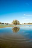 Baum, der im Wasser von kleinem See, Kalahari, Südafrika sich reflektiert Stockbilder