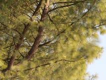 Baum, der im Wind durchbrennt stockbild