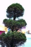 Baum in der japanischen Art Lizenzfreie Stockfotografie