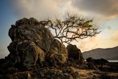Baum, der kämpft, um auf Felsen am Strand zu überleben stockfotografie