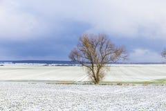 Baum in der ländlichen Winterlandschaft Lizenzfreies Stockfoto