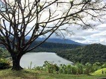 Baum in der Lagune Stockfotografie