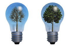 Baum in der Lampe vektor abbildung