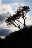 Baum in der Landschaft Stockfotos