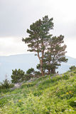 Baum in der Landschaft Stockbild
