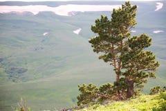 Baum in der Landschaft Stockfoto