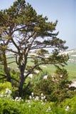 Baum in der Landschaft Stockbilder