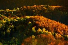 Baum in der Leuchte Lizenzfreie Stockfotografie