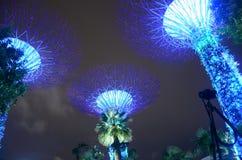 Baum der Leuchte Lizenzfreie Stockbilder