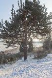 Baum der Liebe bei Sonnenuntergang im Winter in der Stadt von Velsk Stockfoto