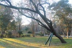 Baum, der mit Eisenstangen als Unterstützung liegt stockfoto