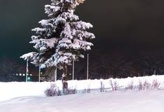 Baum in der Mitte der Stadt Stockfoto