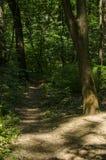 Baum, der nahe bei einem Waldweg steht Stockfoto