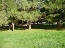 Baum in der Natur Lizenzfreies Stockbild